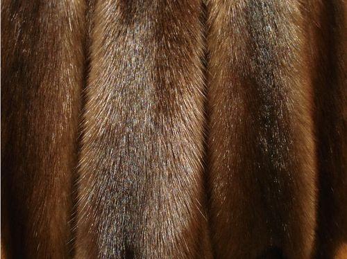 Свойства и особенности меха короткошерстной норки